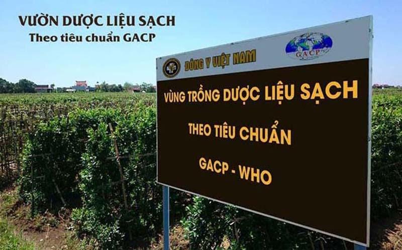 Vườn dược liệu sạch đảm bảo tiêu chuẩn GACP-WHO