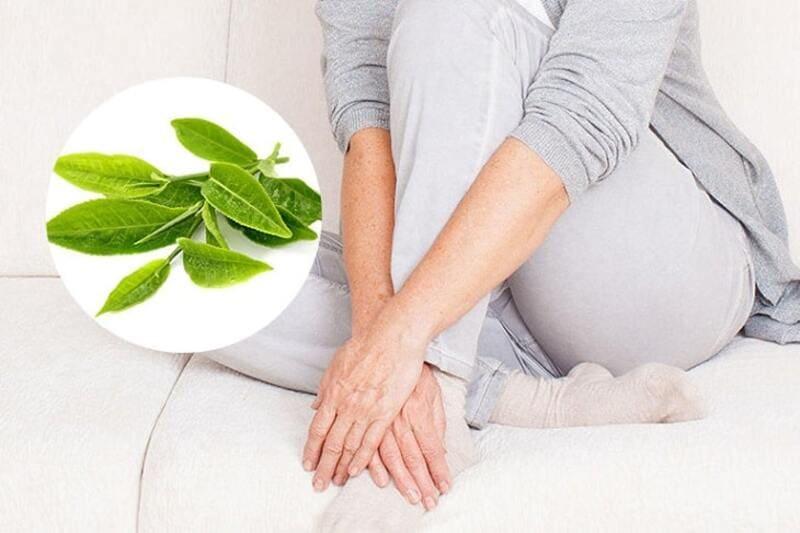 Bà bầu bị viêm lộ tuyến có thể dùng lá trà xanh để rửa hàng ngày