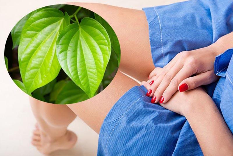 Lá trầu không giúp kháng viêm, khử mùi hiệu quả