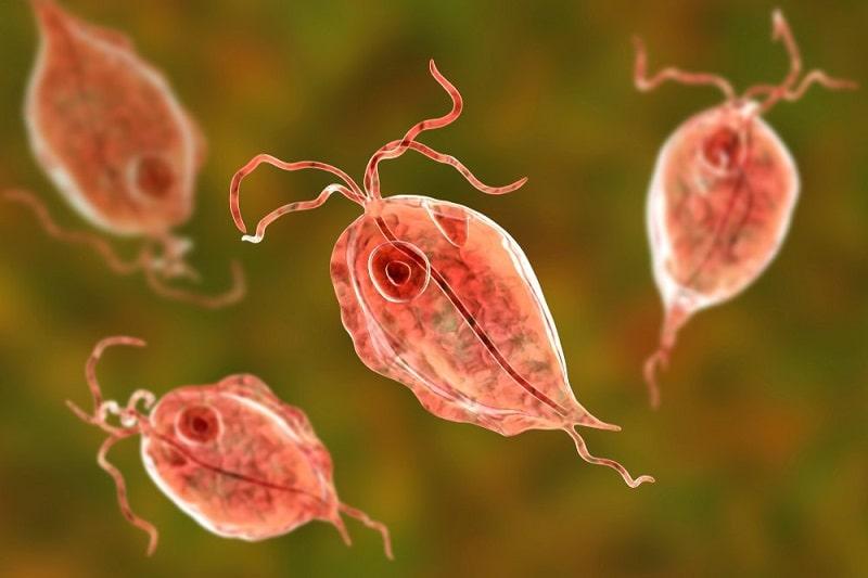 Trùng roi Trichomonas gây bệnh viêm âm đạo