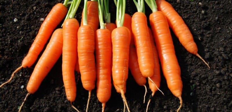 Người bệnh nên bổ sung thêm cà rốt vào chế độ ăn uống thường ngày