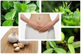Top 8 cách chữa viêm cổ tử cung bằng thuốc Nam hiệu quả nhất