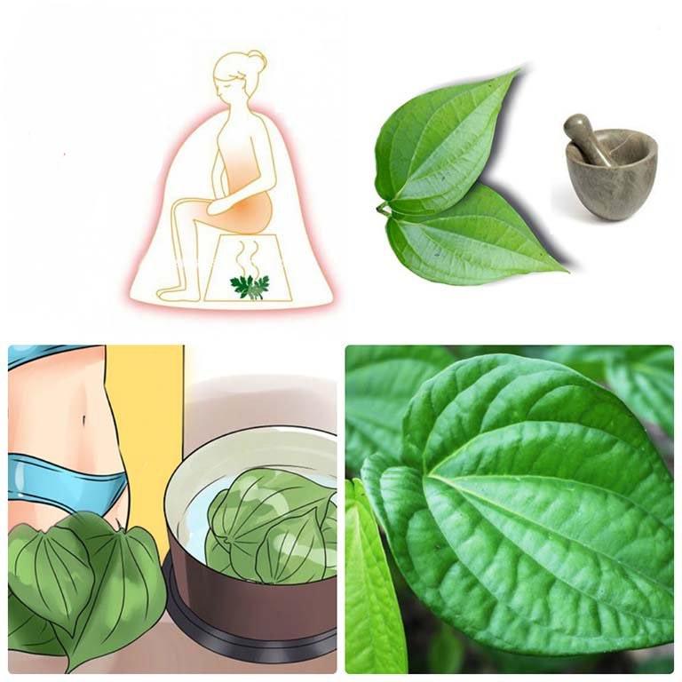 Xông vùng kín với lá trầu không giúp kháng viêm, giảm mùi hôi rất tốt.