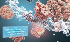 Ủy ban FDA: Xét nghiệm DNA HPV trước khi thực hiện PAP để tầm soát ung thư cổ tử cung