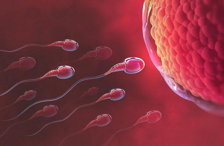 Bệnh lạc nội mạc tử cung có thể gây ảnh hưởng đến quá trình tinh trùng gặp trứng
