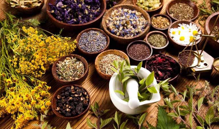 Các thảo dược trong Đông y trị bệnh hiệu quả cao