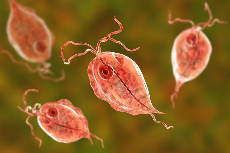 Hình ảnh trùng roi Trichomonas